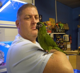 Hahns Macaw | Neon Gecko Glasgow Exotic Pet Supplies